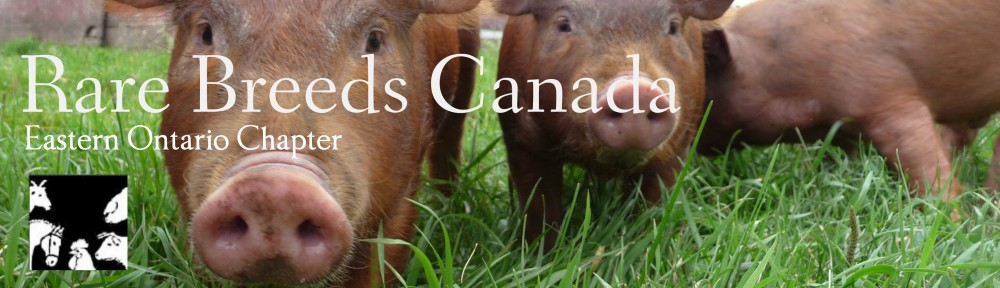 Rare Breeds Canada